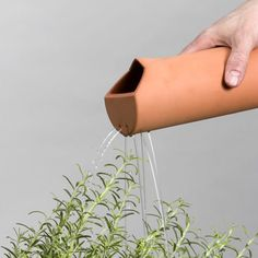 Products include a device for collecting extra rainwater for a plant pot or watering can, a caraffe with spout for drinking water on one side and sprinkling holes for watering a plant on the other.
