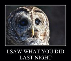"""Act 2 Scene 2 Lady Macbeth- """"It was the owl that shriek'd, the fatal bellman,/ Which gives the stern'st good night."""" The owl is a nocturnal bird, that saw the deed because it was performed at night. Owl Meme, Nocturnal Birds, Funny Owls, Im Proud Of You, Lady Macbeth, Owl Pictures, The Deed, Scene, Night"""