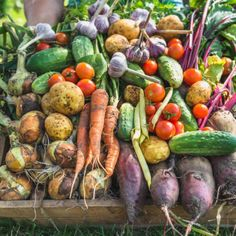 """Preserve fresh fruit and vegetables throughout the winter months by utilizing a method called """"cold storage"""". Root Veggies, Fresh Fruits And Vegetables, Lemon Ginger Detox Water, Floating Plants, Cleanse Your Body, Nutrition, Organic Farming, Water Plants, Farmer"""