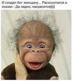 Animals Discover Lol but he& so cute Smiling Animals Happy Animals Cute Funny Animals Cute Baby Animals Funny Cute Animals And Pets Cute Animal Pictures Funny Pictures Hello Pictures Cute Little Animals, Cute Funny Animals, Funny Cute, Cute Dogs, Cute Babies, Funny Monkeys, Smiling Animals, Happy Animals, Animals And Pets