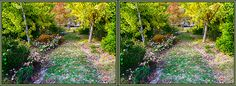 A Fall garden in the Eastern Shore Town of Easton Maryland. A pathway toward the house is lined on each side with Flowering plants even in mid-November. The fall colors mix with the green shrubbery and many blossoms to create a small paradise sanctuary.    This image is a 3D Stereo Crossview. To freeview and perceive depth, have the entire side-by-side image within view and then gently converge (cross) your eyes and focus on the middle image while ignoring the outside.