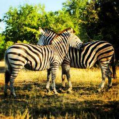 Kruger beauty