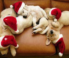 sleeping santa's