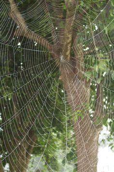 Evergreen Native American Survival Skills - The Apache Foot . Spider Silk, Spider Art, Spider Webs, House Spider, Spider Crafts, Itsy Bitsy Spider, Charlottes Web, Dew Drops, Amazing Spider