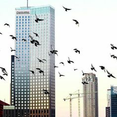 Birds flying high, you know how i feel. ▫ #Rottergram by @tonyvoisin ▫ Plaats zelf jouw foto op onze facebookpagina: www.facebook.com/Rottergram  . . . #rotterdam #rottergram010 #birdsofrotterdam #onzehaven #gersmagazine #igersrotterdam #ig_rotterdam #igrotterdam #gemeenterotterdam #rtvrijnmond #birds #urbanphotography #Roffa #010byday #autumn #rotturban #autumn #skylinerotterdam #mist #misty #rotterdamcity #herfst #duiven #doves