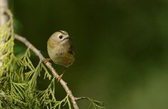 Birds on the move - Natures Home magazine uncovered - Our work - The RSPB Community