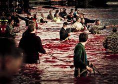 Defensores de ballenas: Islas Feroe