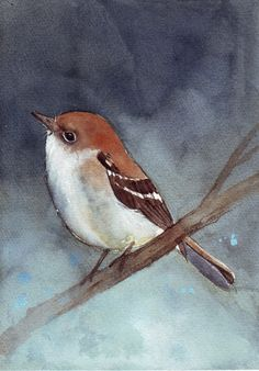 Bird Painting Fly Catcher print of watercolor by Splodgepodge, $15.00