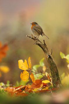Vogel-Welten - nahlinse Naturfotografie