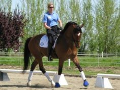 Valentino, an imported KWPN Dutch gelding. Currently showing Intermediare-I with scores to high 60's. Schooling Grand Prix. Completely uncomplicated and VERY easy to sit, easy in the bridle..naturally round. Has been shown extensively with many national and regional wins with most scores over 70%. Click to view photos, video and more information