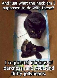 Minions of darkness:)