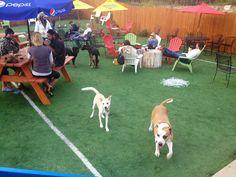 The Ten Best Dog Friendly Patios In Denver