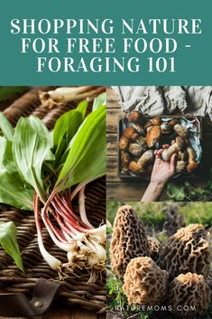 Shopping Nature For Free Food – Foraging It is a completely viable and budget friendly way to put food on the table. Edible Wild Plants, Plant Identification, Living Off The Land, Wild Edibles, Gardening For Beginners, Gardening Tips, Freundlich, Natural Living, The Fresh