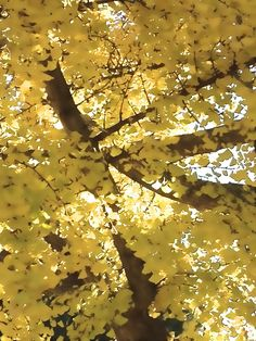 Yellow Leaves-2