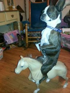 Dump A Day Attack Of The Funny Animals - 48 Pics if i were a dog i would totally do this