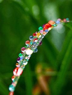 Rainbow crystals on a plant