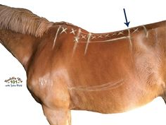 Want to learn how to check and fit your own saddle? Save yourself lots of money learn these tips.