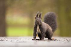 Squirrel by PetrMulacek via http://ift.tt/2mHTYID