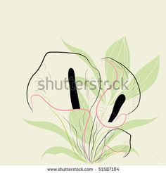 Calla Lily Stock Photos, Calla Lily Stock Photography, Calla Lily Stock Images : Shutterstock.com