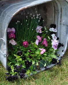 Pansies in galvanized tub turned on its side