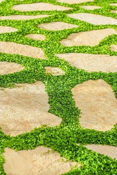 Mercury Bay Weed ~Dichondra repens~ Beautiful Mat-Forming Ground Cover ~ Lawn Plant ~ Kidney Weed Me Side Yard Landscaping, Tropical Landscaping, Landscaping Ideas, Backyard Ideas, Stone Backyard, Nice Backyard, Landscaping Equipment, Farmhouse Landscaping, Gardens