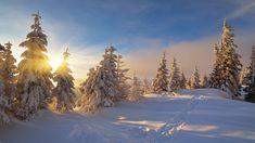 Ośnieżone, Świerki, Zima, Wschód słońca