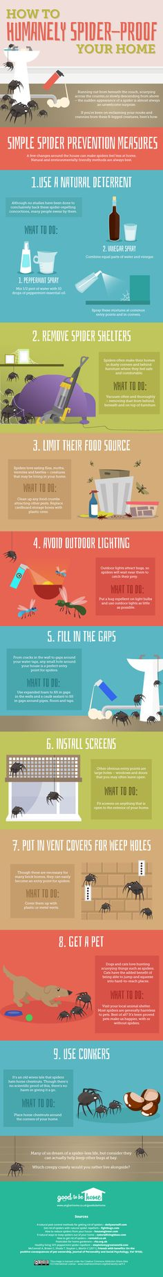 How to get rid of spiders from your home [infographic]   ecogreenlove ••• Brought to you by Anglian Home'sGood to be Home