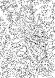 Peacocks - Printable Adult Coloring Page from Favoreads (Coloring book pages for adults and kids, Coloring sheets, Coloring designs) Peacock Coloring Pages, Flower Coloring Pages, Cute Coloring Pages, Printable Adult Coloring Pages, Animal Coloring Pages, Coloring Sheets, Coloring Books, Coloring Pages Nature, Abstract Coloring Pages