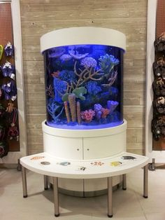 Nautilus Discovery Tank by Living Color Aquariums