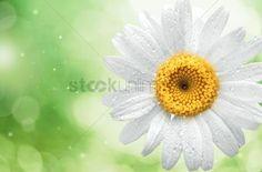 Natural  background : Spring  garden  summer