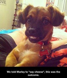 #humor #funny #lol #puppies funny pics of puppies :)