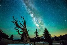 Ancient Trees Photo by Joe Capra -- National Geographic Your Shot