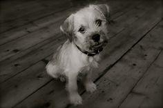 They have a dog called a Schnug! (Mini Schnauzer & Pug)
