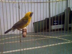 Burung kesayangan