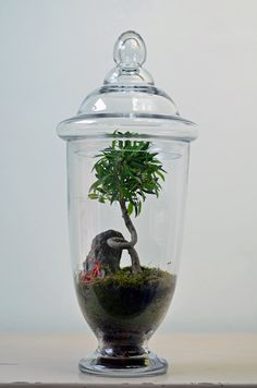 Apothecary Jar Terrarium 'Twisted' with tree, moss, and red bike. Etsy.