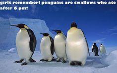 girls diet funny food penguin