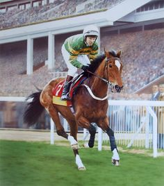 Istabraq Limited Edition Horse Racing Print by Equestrian Artist Stephen Smith Most Beautiful Animals, Beautiful Horses, Derby Horse, Sport Of Kings, Thoroughbred Horse, Horse World, Racehorse, Equine Art, Horse Riding