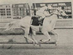 Foggy Note(1965)The Axe II- Silver Song By Royal Note. 5x5 To Teddy.Teddy's Daughter La Troienne Fourth Dam On Sire Sire; Teddy & Plucky Liege Son Bull Dog Is Sire Of Third Dam Of Female Side. 34 Starts 10 Wins 6 Seconds 2 Thirds. $111,820. Dam Of Relaunch & Moon Glitter.