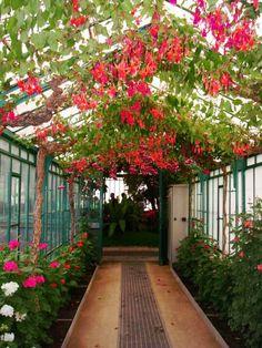 Jardín botánico bruselas