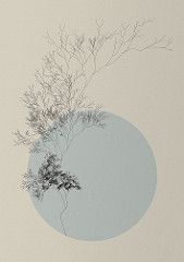 L-System Plant (Diana Lange) Tags: plant tree nature graphics generative processing fractal lsystem natureofcode gestaltung processingorg lindenmayer Herbs Image, Paint Line, World Best Photos, Flower Tattoos, Trees To Plant, Fractals, Cards Against Humanity, Moon, Wallpaper