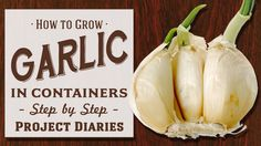 ★ How to: Grow Garlic in Containers (Step by Step Guide) - YouTube