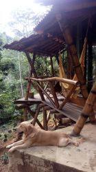 Jacutinga do Caparaó – Associação Permacultural