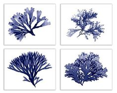 Navy Blue Set of Four 8x10 Inch Seaweed Prints No.s 03, 20, 24, and 25 in classic navy blue, Coastal Decor Print Set
