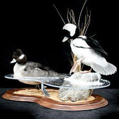 Waterfowl Mounts - Waterfowl Mounts - Photo Galleries | Walnut Hollow - Country