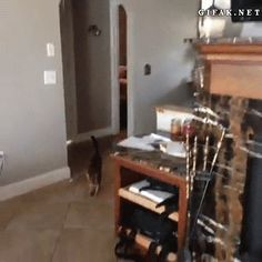 """I was thinking, """"the cat is going to run around that wall faster and end up chasing the dog."""" Then I screamed..."""