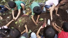 """5 lessons for """"greening"""" your curriculum from a Bronx success story"""