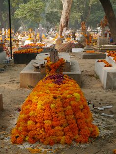 Check this incredible graveyard in Delhi, India - it's behind the hotel we stay at with our tours!