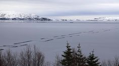 """Weird geometric pattern etched into Iceland's largest lake - Scientists say the markings are the result of an incredibly rare phenomenon called 'finger rafting', which occurs when two sheets of ice on a body of water push over and under each other alternately, creating what are described as """"fingers."""" The natural patterns only occur when both sheets of ice are of roughly the same thickness."""
