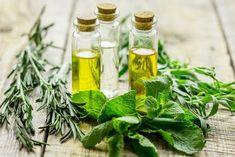 ❤️ Illóolajok hősies küzdelme a köhögéssel Pickles, Cucumber, Herbs, Herb, Pickle, Zucchini, Pickling, Medicinal Plants