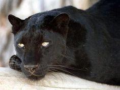 www bbw černá kočička com